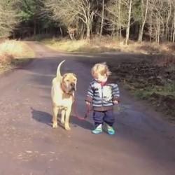 un petit garçon et son vieux chien