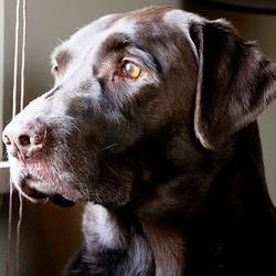 peur chien formation facteur