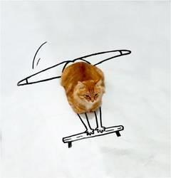 photo chat roux détournée