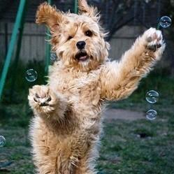 photos de chiens avec bulles