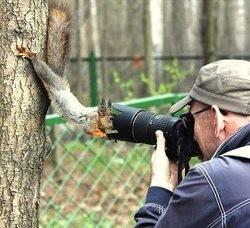 photos insolites écureuil