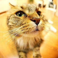 chat fisheye
