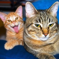 chiens chats droles