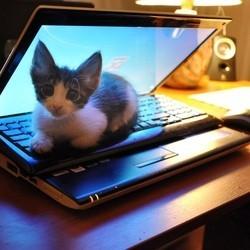 photos chats ordinateur