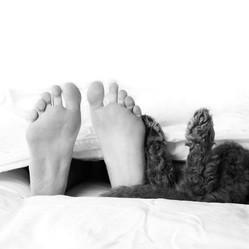 Pieds humains et chiens