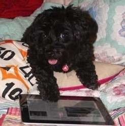 chien peinture ipad