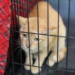 un chat survit à un voyage de 11 000 km sans eau ni nourriture