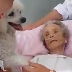 chien hôpital