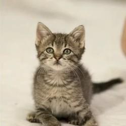 un chaton handicapé profite de la vie
