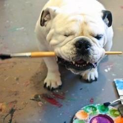 piper une chienne bulldog devenue peintre