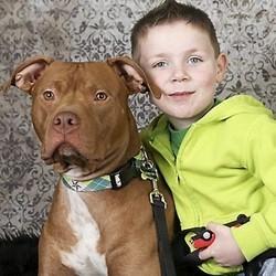 Tatortot chien héros