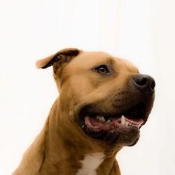 le maroc veut éradiquer les chiens dangereux