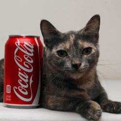 Pixel record petit chat