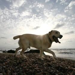 plages autorisées aux chiens france 2011