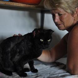 chat brûlé cruauté