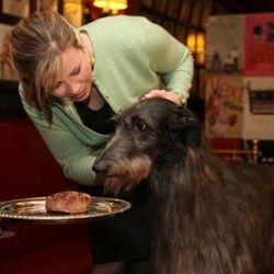 plus beau chien Etats Unis concours beauté canine Westminster