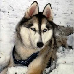 plus belles photos de chiens wamiz
