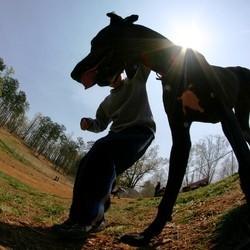 plus grand chien du monde giant georges