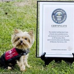 plus petit chien travail monde guinness book