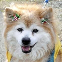plus vieux chien du monde mort