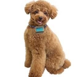 Fujitsu lance un podomètre pour chien