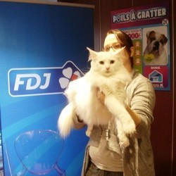 jeu fdj poils à gratter chat enchanting
