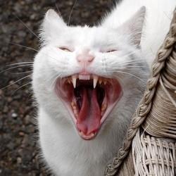 10 poisons pour chats et chiens