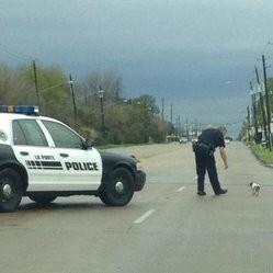 un policier bloque la circulation sur une route pour sauver un chien