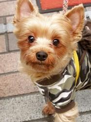chien star poncho