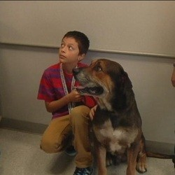 un enfant et son chien réunis
