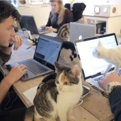 chats au bureau