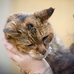 poppy le chat le plus vieux du monde