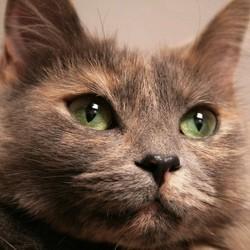 conseils prendre soin vieux chat