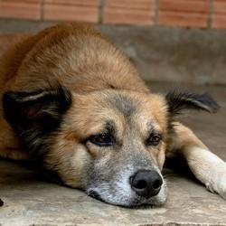 chien rentrée stress
