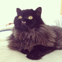 chat star du web
