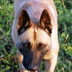 13 mois prison chien battu cambrai