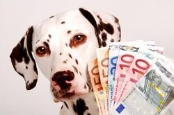 chien argent riche