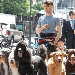 Daniel Radcliffe et chiens