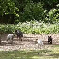 promenade collective educative chiens