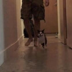 Promener un humain