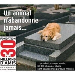 pubs animaux abandon adoption