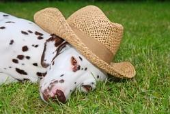 chien lunettes de soleil gadget