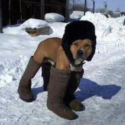 proteger chien hiver froid neige