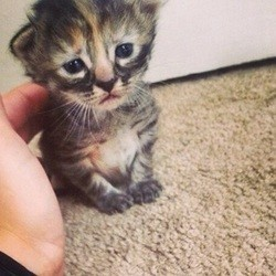Purrmanently Sad Cat, le chaton qui fait fondre le web