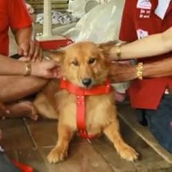 un chien héros sauve un bébé abandonné