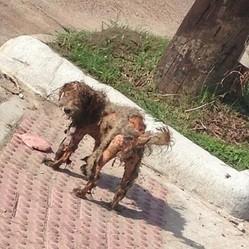 chien errant, chien maltraité