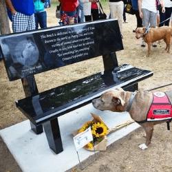 Banc en mémoire de Puppie Doe