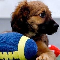 puppy bowl match foot chiots