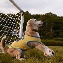 un chien joue au foot