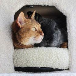 un lapin et un chat deviennent meilleurs amis